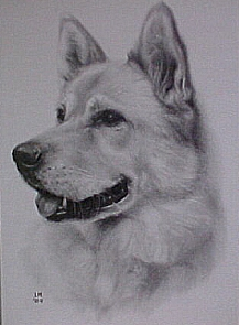 dog pencil drawing