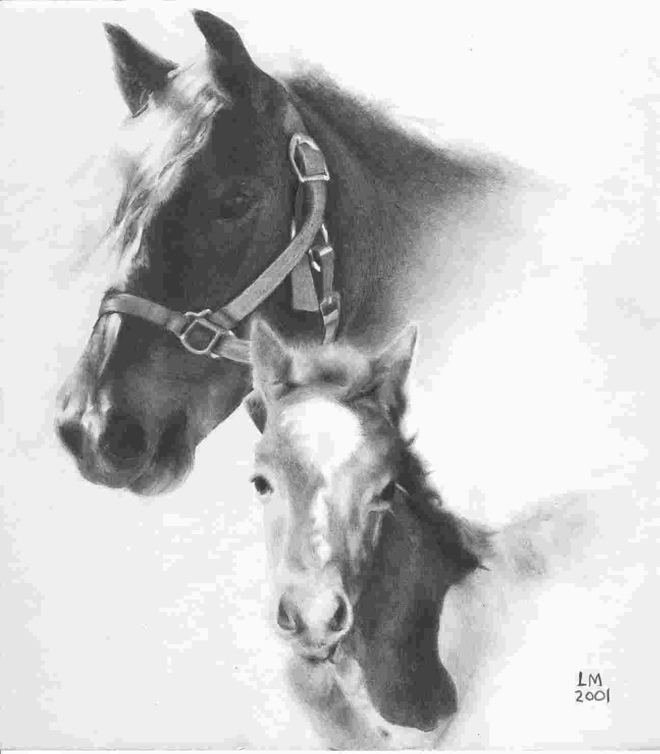 horse pencil drawing
